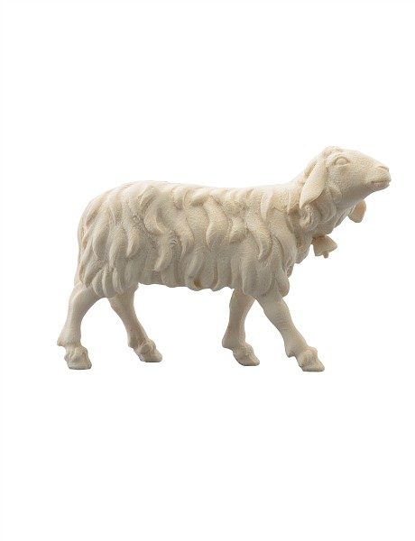 Schaf rechtsschauend