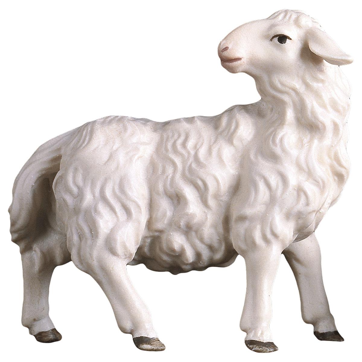 Schaf rückwärts schauend