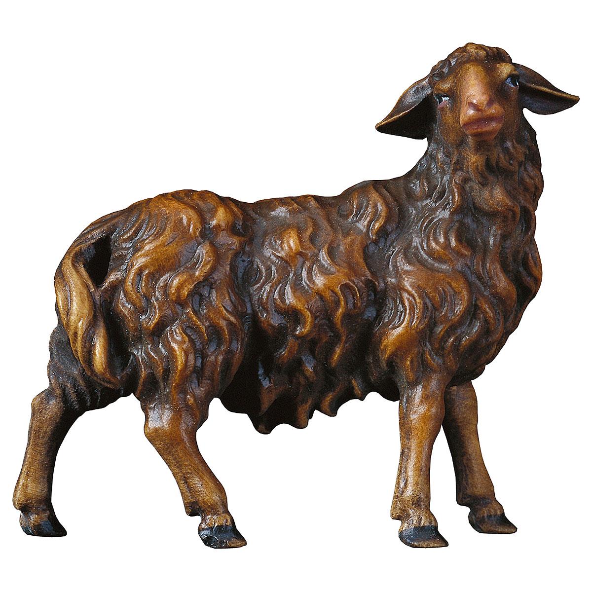 dunkles Schaf nach rechts schauend