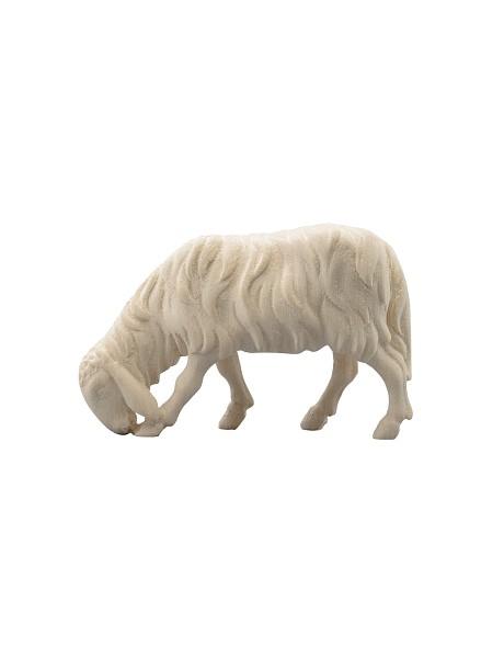 Schaf fressend links
